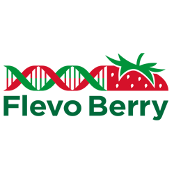 Flevo Berry